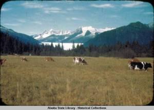Dairy_herd_Mendenhall
